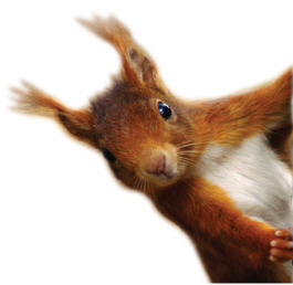 Side-Squirrel-2.png