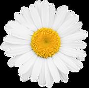 flower-cion.png
