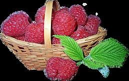 raspberries-3966401_960_720.png