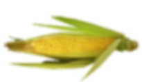 vegetable-2489368_960_720.png