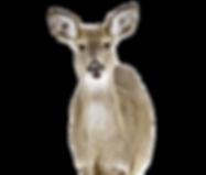 deer-1210972_1920_edited_edited_edited.p
