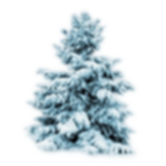 fir-pine-family-christmas-decoration-for