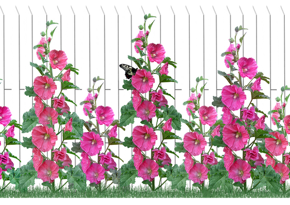 flowers-4056220_960_720.png