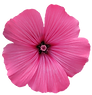 single-flower-clipart-29461.png