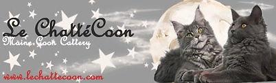 gatos maene coon, gatitos maene coon