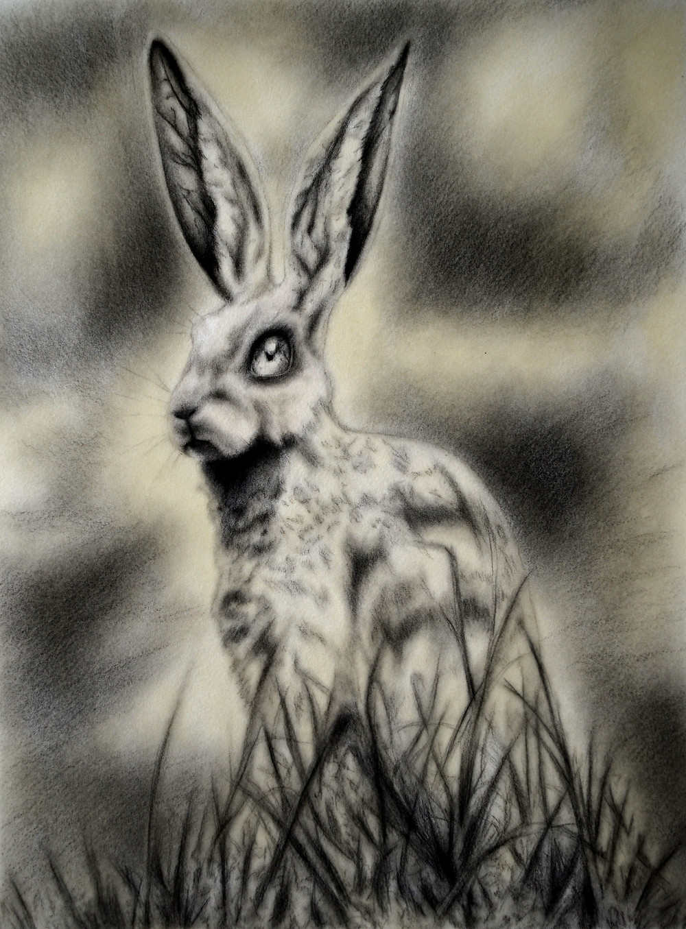 Black and white drawing of a rabbit in a grass field