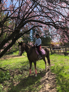 Nassau County Horseback Ring .jpg