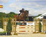 Champus Horse Holsteiner Jumper.jpg