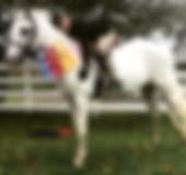 Olivia Horseback Riding.jpg