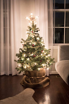 Care-for-a-live-potted-Christmas-tree-8-