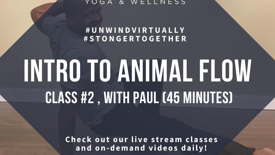 Intro Animal Flow
