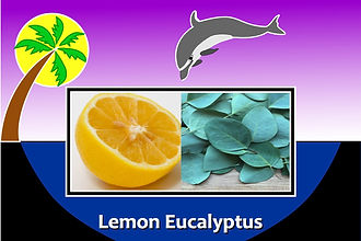 BS Lemon Eucalyptus.jpg