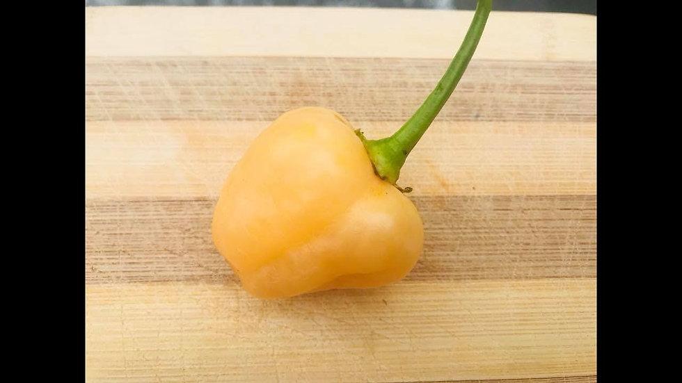 Peachadew (Capsicum baccatum)