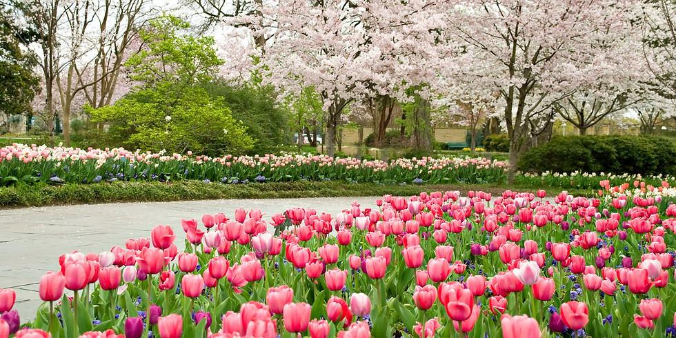 Dallas Blooms at the Arboretum!
