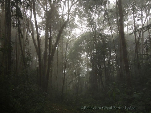 Cloud Forest-1.jpg