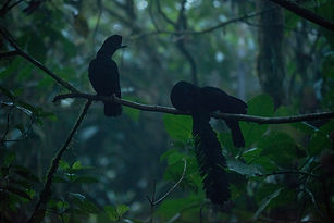 39B UMBRELLA BIRD 3.jpg