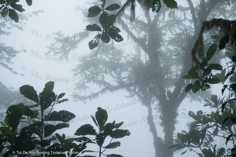 Bellavista Cloud Forest Reserve