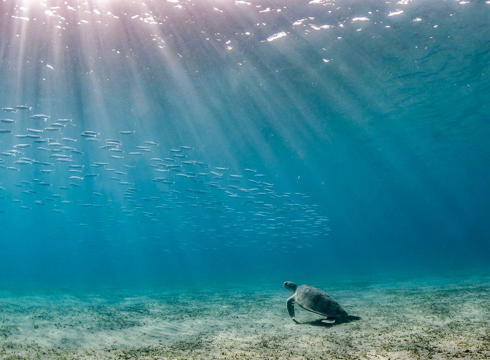 1-Turtle.jpg