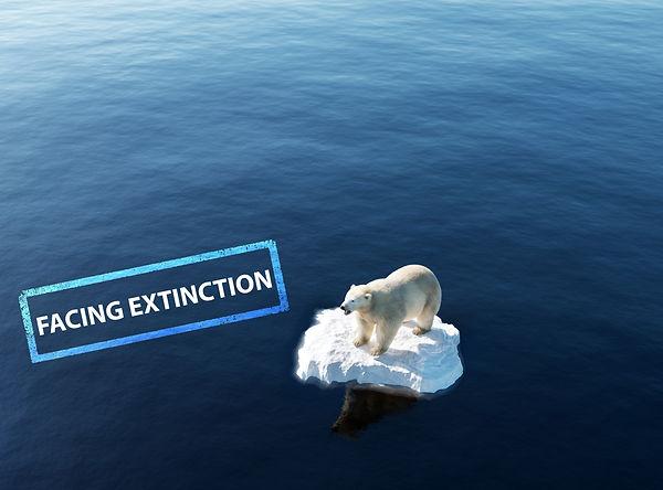 Facing Extinction Polar Bear.jpg