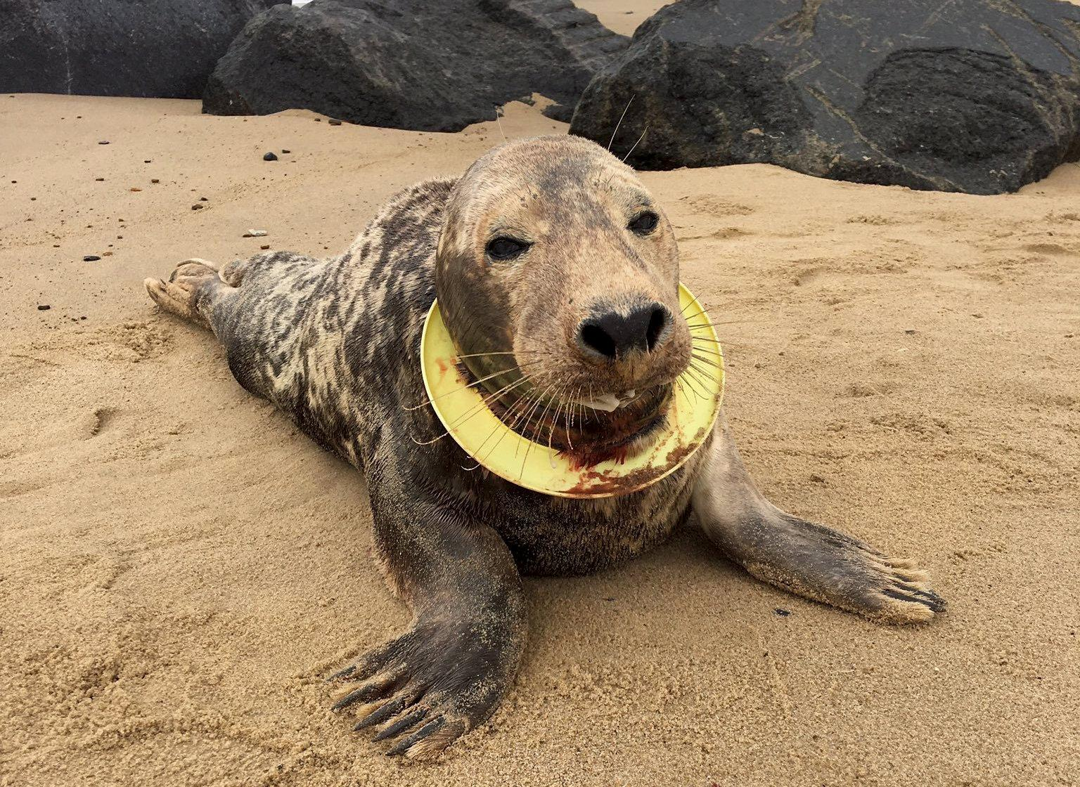 plastic-frisbee-and-the-seal