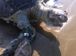 Image tortue plastic pollution