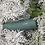 Thumbnail: KELP FOREST - SMART SERIES