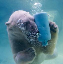 Plastic Pollution Antartic