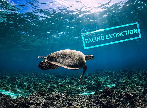 Facing Extinction Sea Turtle.jpg