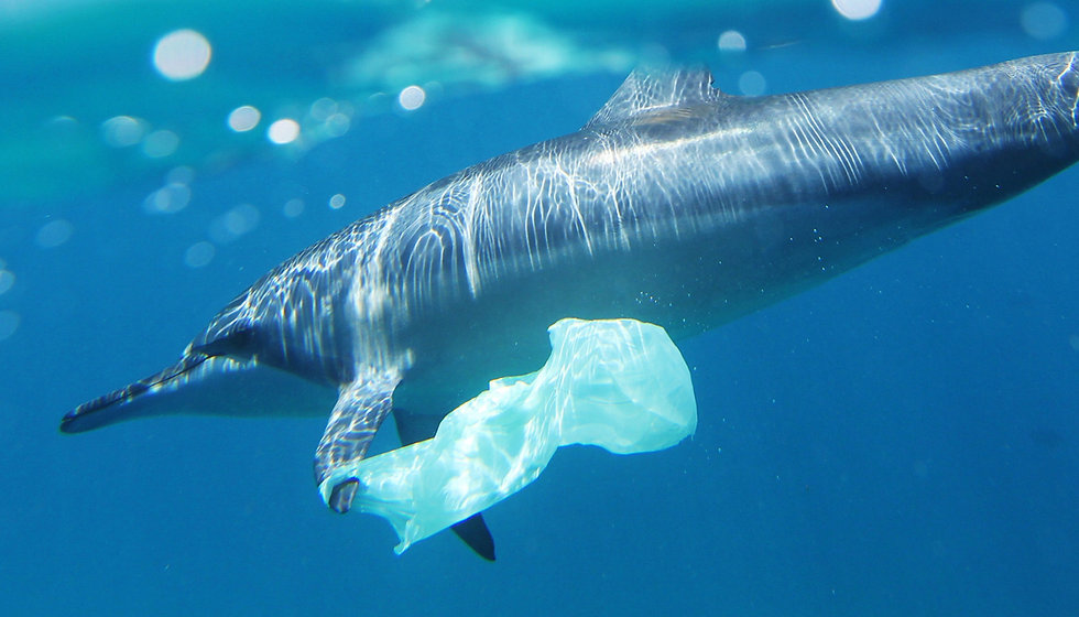 Dolphin and plastic bag pollution