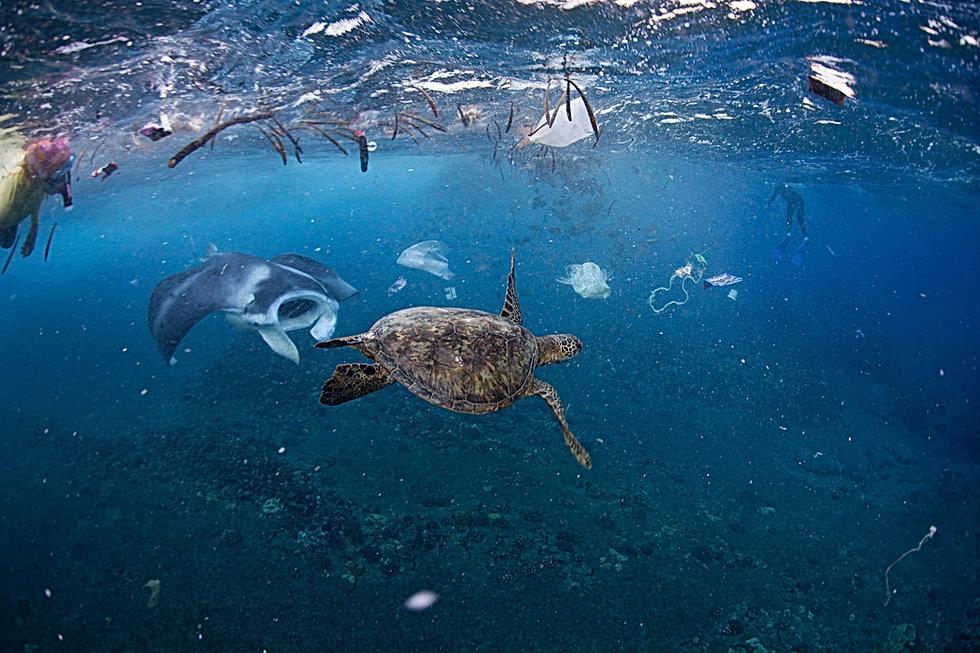 ocean-trash.jpg