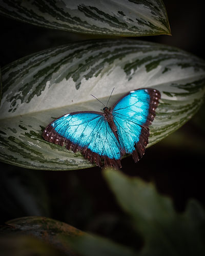 Butterfly effect.jpeg