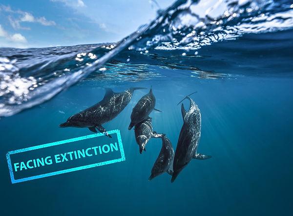 Facing Extinction Dolphins.jpg