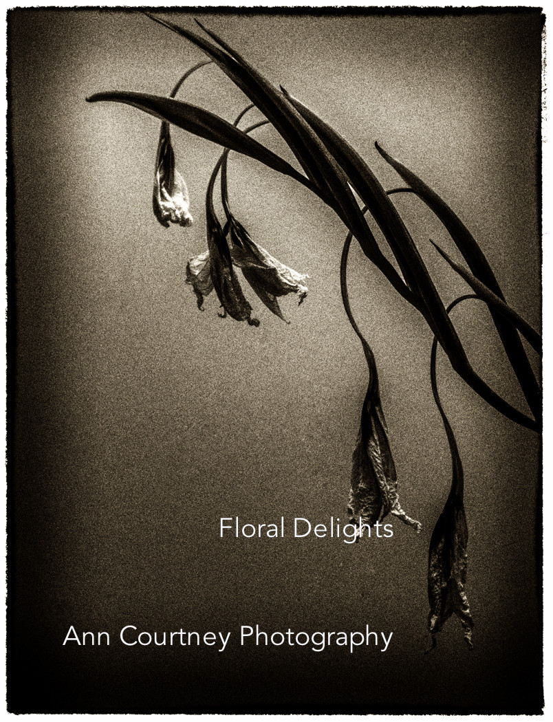 Art flower photography by Ann Courntney