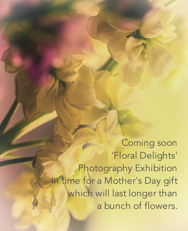'Floral Delights' - Something for Spring and Mothers Day. An exhibition of photographic work