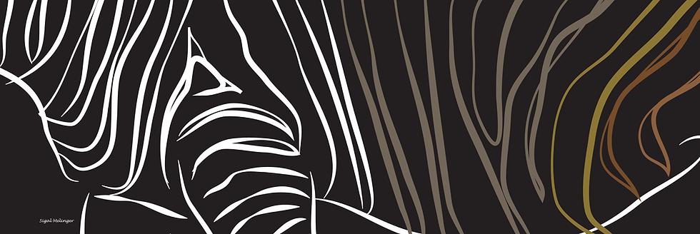 ״זברה שחורה״
