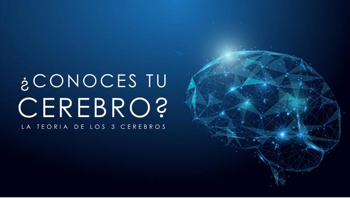 ¿Conoces tu Cerebro? La teoría de los 3 cerebros
