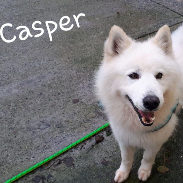 Casper2.jpg