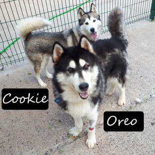 Cookie & Oreo.jpg