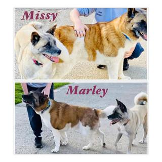 Missy and Marley.jpg