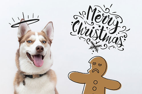 HRI Christmas Cards (set of 5)