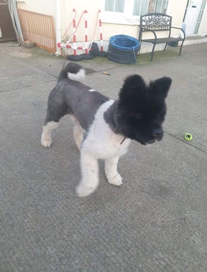 Django after coat removed