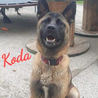 koda_edited.jpg