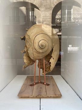 séverine assouline- fossile du temps de