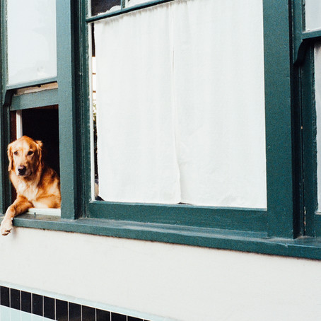 Bare Land Condos: and dogs and windows