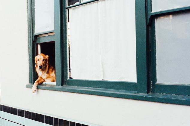 Tierische Nachbarn