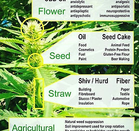 Just some basics for the newbs 😁😘💚🌱