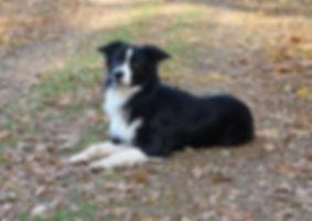 11.10.19 Baxter.JPG