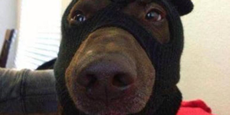 Hond & essentiële oliën – (probleem)gedrag ondersteunen op een natuurlijke manier