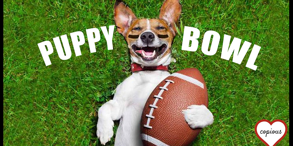 Puppy Bowl Puppy Party!