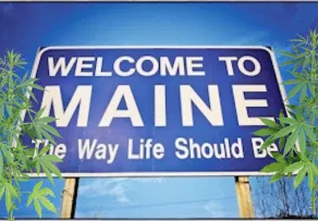Marijuana Has Become Maine's Most Valuable Crop